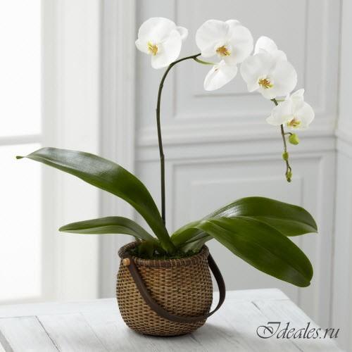 Домашние растения с красивыми цветками