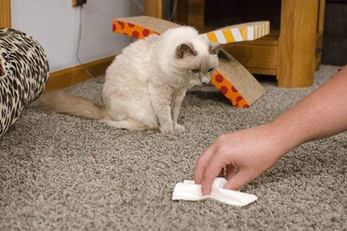 Как убрать кошачий запах мочи в квартире, Секреты красоты и здоровья женщины
