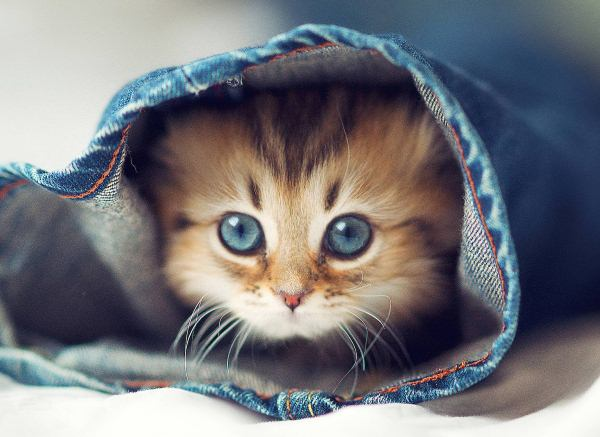 Как убрать кошачий запах мочи в квартире