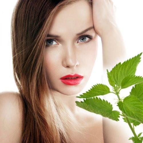 Крапива для укрепления волос: как правильно использовать