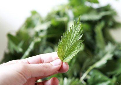 Листья крапивы для волос. Приготовление и применение