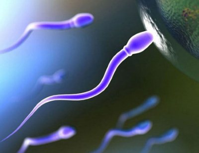 Благоприятные дни для беременности после месячных
