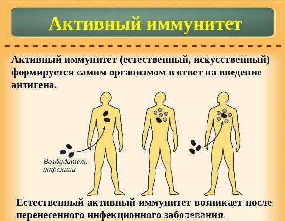 Искусственный пассивный иммунитет вырабатывается после введения сыворотки