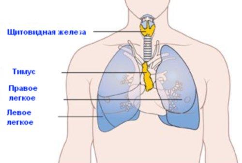 Как проверить иммунитет у взрослого человека