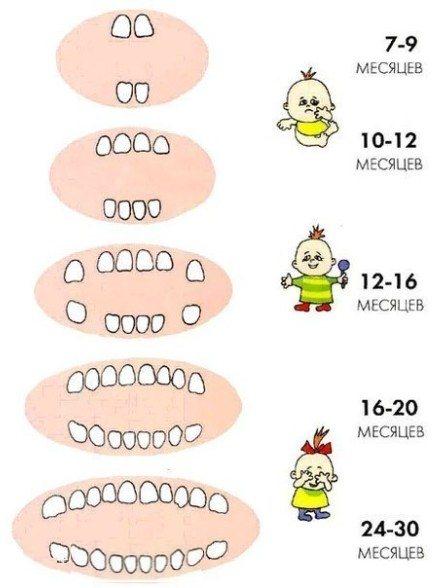 Первые зубки у грудничков, когда начинаю расти