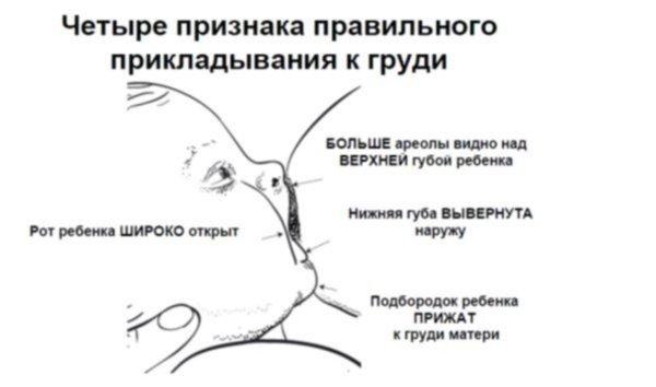 Если срыгивания у грудничков. Что советует Комаровский