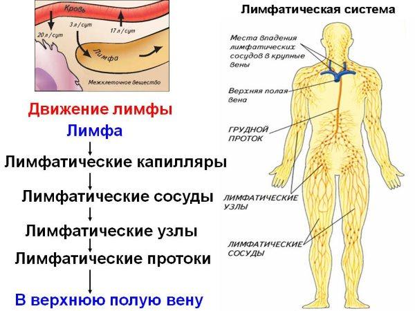 Лимфодренажный массаж ног в домашних условиях