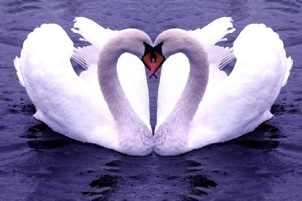 влюбленный козерог мужчина - поведение и признаки
