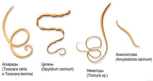 Как определить наличие паразитов в организме человека. Симптомы