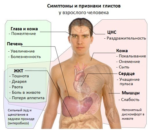 паразиты в организме к какому врачу обращаться