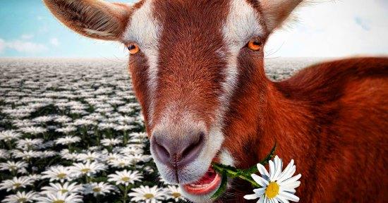 красная коза