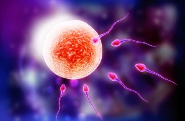 Может ли наступить беременность сразу после месячных. Первые признаки