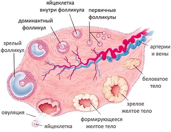 Курение и зачатие