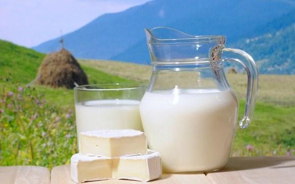 Козье молоко. Полезные свойства, противопоказания. Что лечит, как употреблять