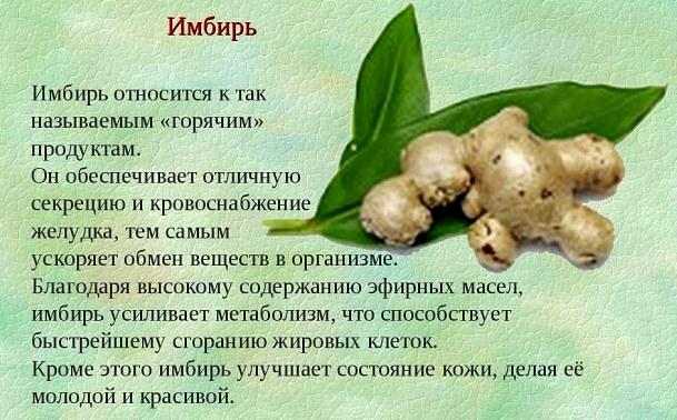 Имбирь. Полезные свойства для организма и здоровья человека. Рецепты применения