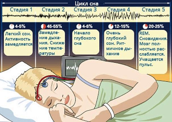 Медленный и быстрый сон - суточная норма для взрослых и детей. Фазы сна