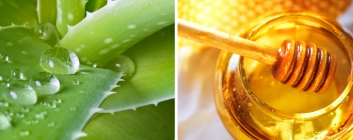 Алоэ с медом. Рецепт лечения желудка, кашля, бронхита, для иммунитета. Противопоказания