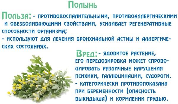 Лечебные свойства полыни для организма. Как приготовить и употреблять полезный отвар, настойку. Рецепты от паразитов, глистов, рака. Противопоказания