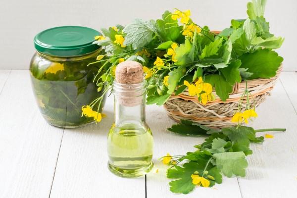 Чистотел - лечебные свойства и противопоказания, рецепты применения для здоровья