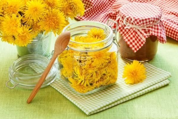 Одуванчик - лечебные свойства и противопоказания, польза и возможный вред применения. Рецепты применения корня, цветков, листьев
