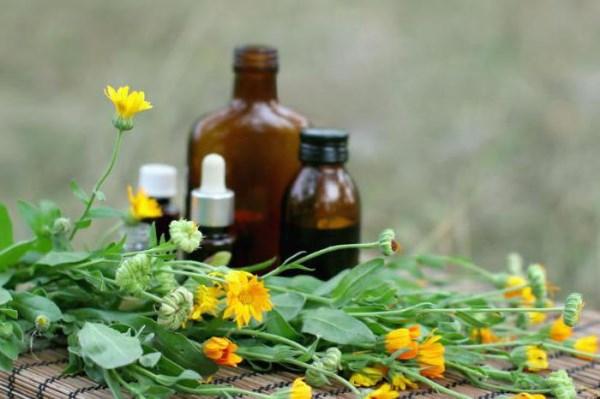 Девясил - лечебные свойства, польза и противопоказания. Описание, виды растения, препараты с девясилом и их применение