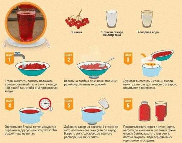 Калина красная как целебное растение: полезные свойства и противопоказания, рецепты приготовления и применение дома