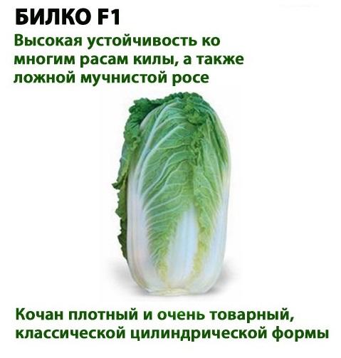 Пекинская капуста. Польза и вред, состав, калорийность, свойства, противопоказания. Рецепты
