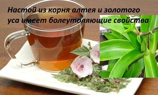 Катарантус розовый: лекарственное растение, применение, отзывы, полезные свойства, противопоказания, формула цветка