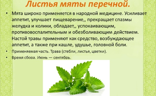 Мята перечная. Лечебные свойства, рецепты применения в народной медицине, как готовить, хранить и употреблять