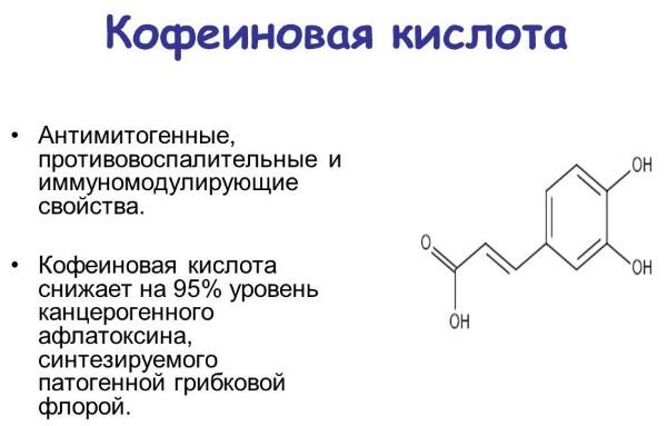 Болиголов. Лечебные свойства для организма женщин, детей, мужчин, лечение заболеваний. Как принимать, рецепты