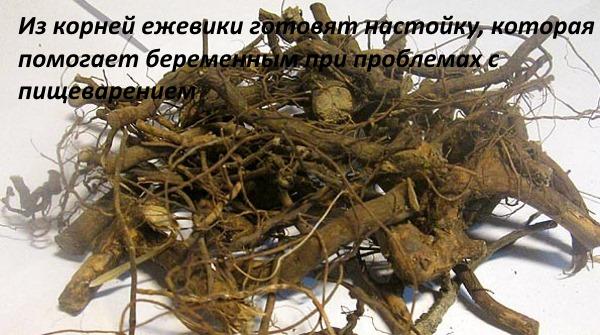 Ежевика. Полезные свойства для организма, лечебные листья. Противопоказания, рецепты варенья, компота, джема, торта, наливки, вина