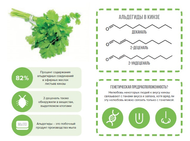 Кинза. Полезные свойства кориандра для здоровья женщин, мужчин и детей. Рецепты применения в народной медицине, кулинарии и косметологии