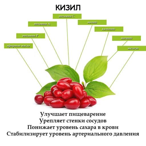 Кизил. Полезные свойства для организма мужчин, детей, женщин, при беременности. Состав, показания и противопоказания. Рецепты приготовления