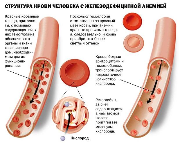 Манжетка. Лечебные свойства и противопоказания, рецепты применения в народной медицине