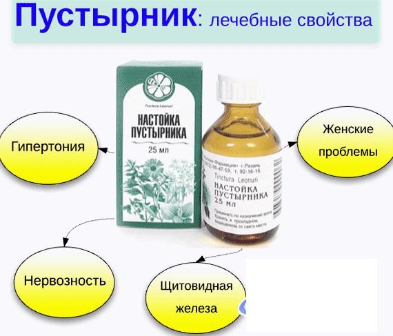 Пустырник. Лечебные свойства, противопоказания. От чего помогает, как применять в таблетках, настойка, экстракт