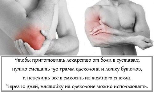 Гвоздика пряность. Полезные и лечебные свойства, применение в народной медицине, и противопоказания