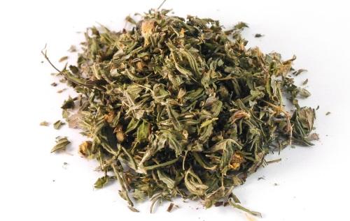 Курильский чай. Лечебные свойства и противопоказания, рецепты применения лапчатки. Сбор и заготовка