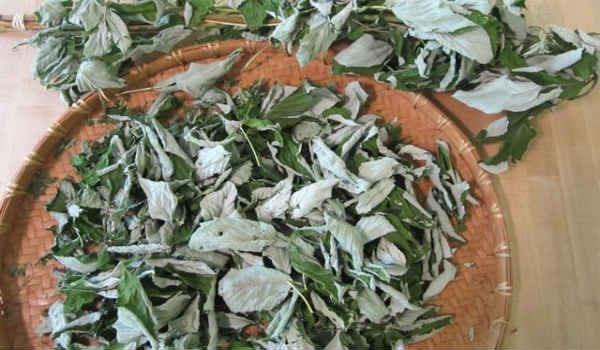 Листья малины. Лечебные свойства и противопоказания в гинекологии, для сердца, эндометрия, перед родами