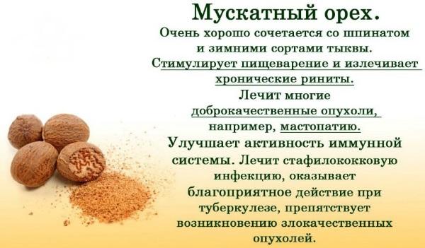 Мускатный орех. Полезные свойства, как употреблять молотый, целый. Рецепты и противопоказания