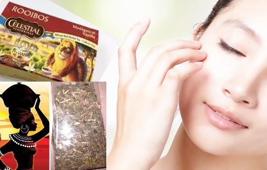 Ройбуш трава. Полезные свойства и возможный вред, виды, как правильно заваривать чай, можно ли при беременности. Противопоказания