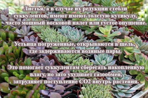 Суккуленты: фото и названия, виды растений, цветы, кактусы, уход в домашних условиях