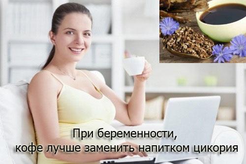 Цикорий. Польза для здоровья, растворимый, жидкий, сублимированный, для похудения, сколько можно пить