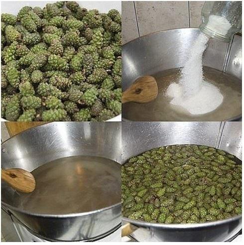 Как приготовить варенье из сосновых шишек. Рецепты, когда собирать, как принимать, лечебные свойства