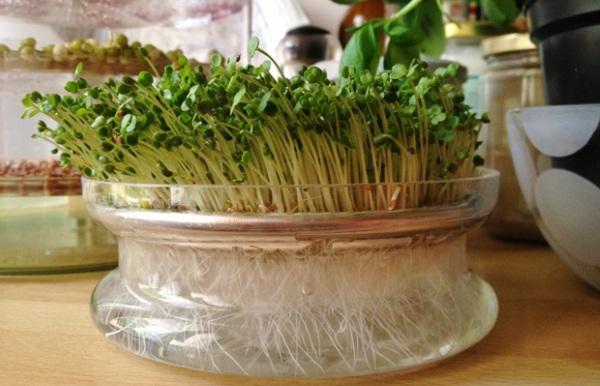Семена чиа. Полезные свойства, рецепты, как употреблять для похудения, здоровья женщин при беременности. Противопоказания