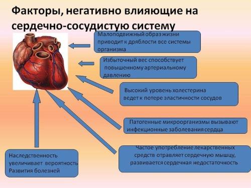 Полезные свойства голубики для женщин, мужчин и детей. Как приготовить и употреблять