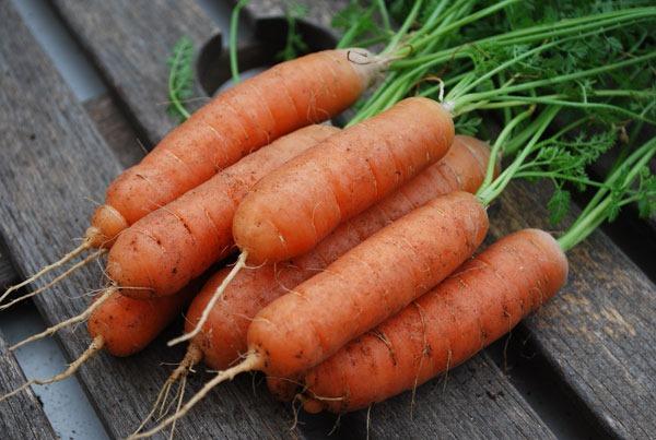 Как хранить морковь зимой в погребе, холодильнике, подвале, квартире, пакетах, песке, кессоне