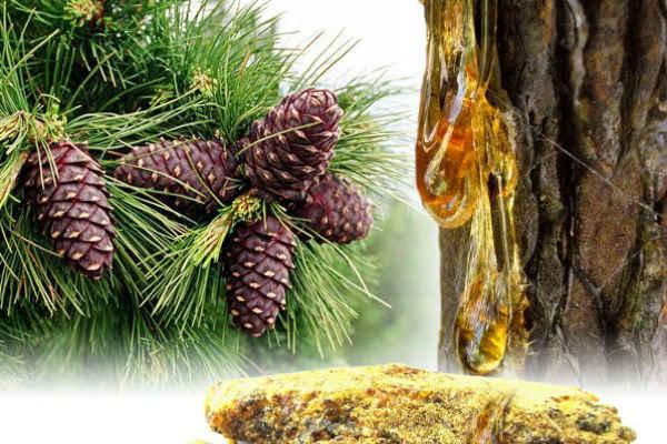 Окопник лекарственный. Фото и описание, лечебные свойства растения. Как приготовить и применять траву