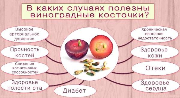 Виноград. Польза и вред для организма человека, калорийность, витамины. Описание сорта темный, синий, белый, зеленый, свойства