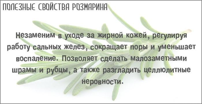 Розмарин. Полезные свойства и противопоказания. Трава, масло, семена в кулинарии, медицине, косметологии