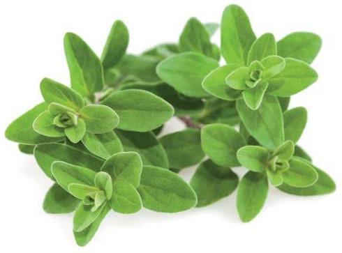 Пряные травы. Фото с названиями, применение в кулинарии, особенности выращивания